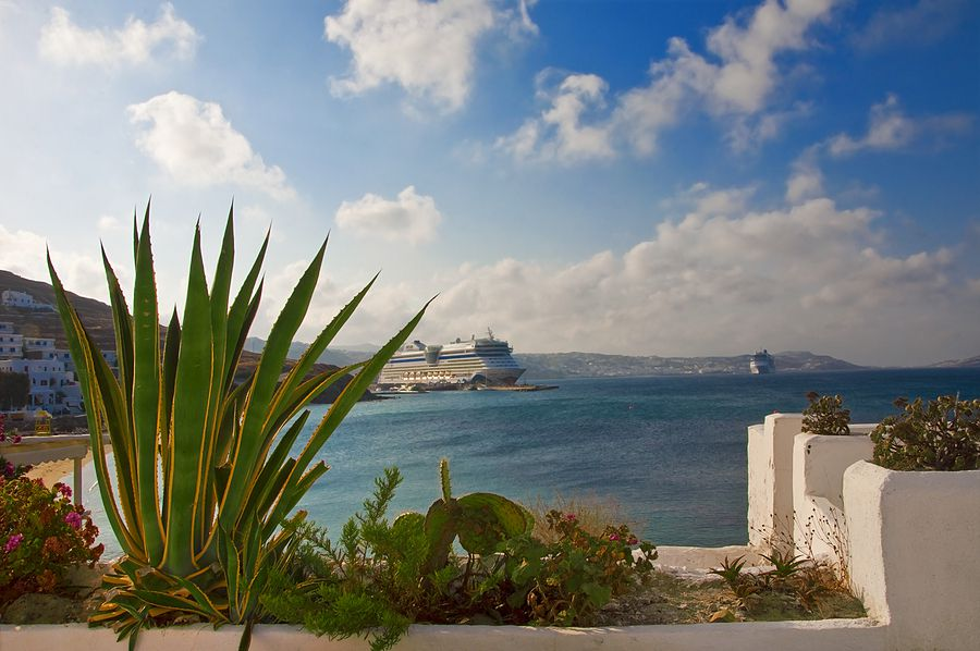 Cactus against the backdrop of the sea, clouds and a cruise liner