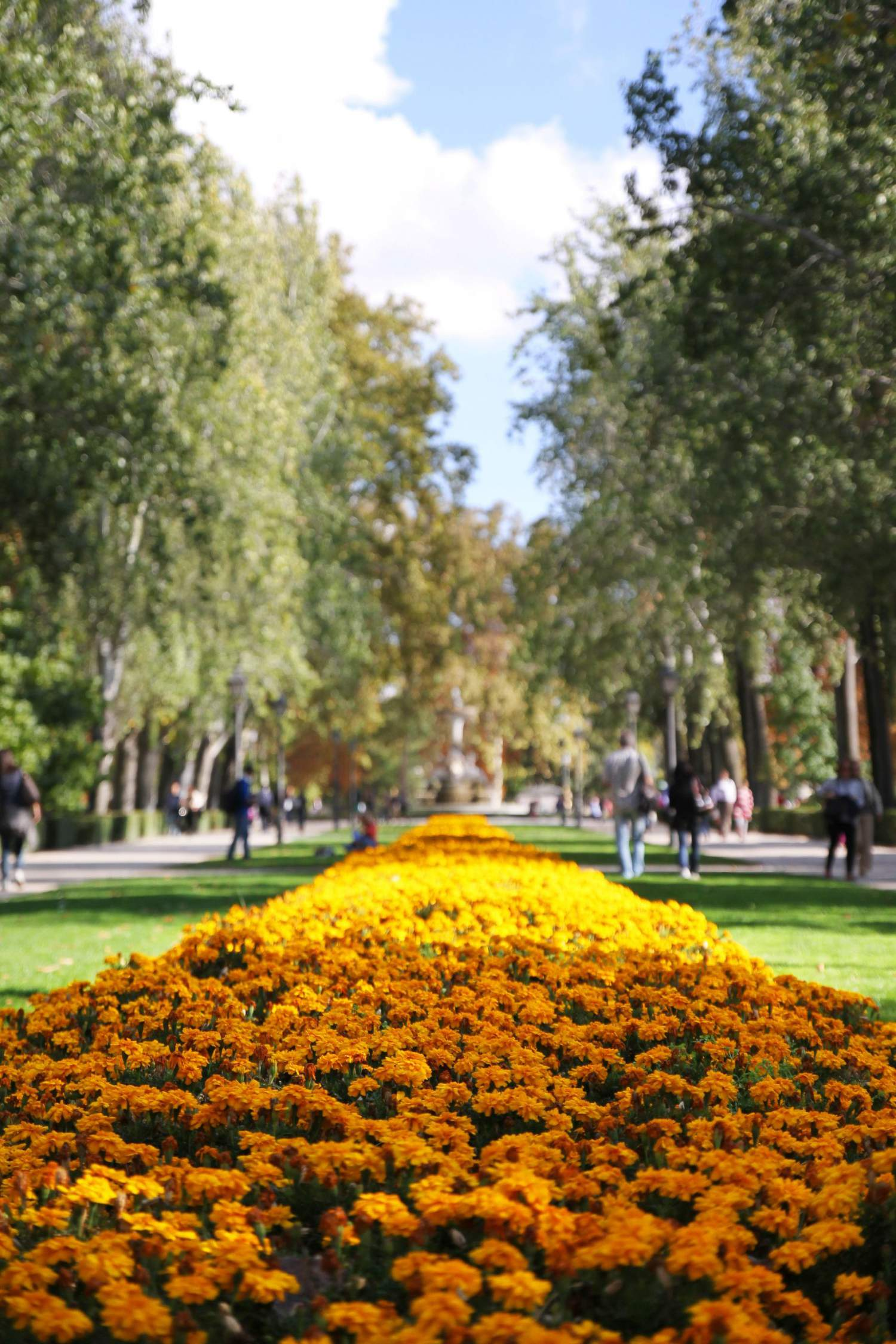 Flower gaden in Madrid, Spain