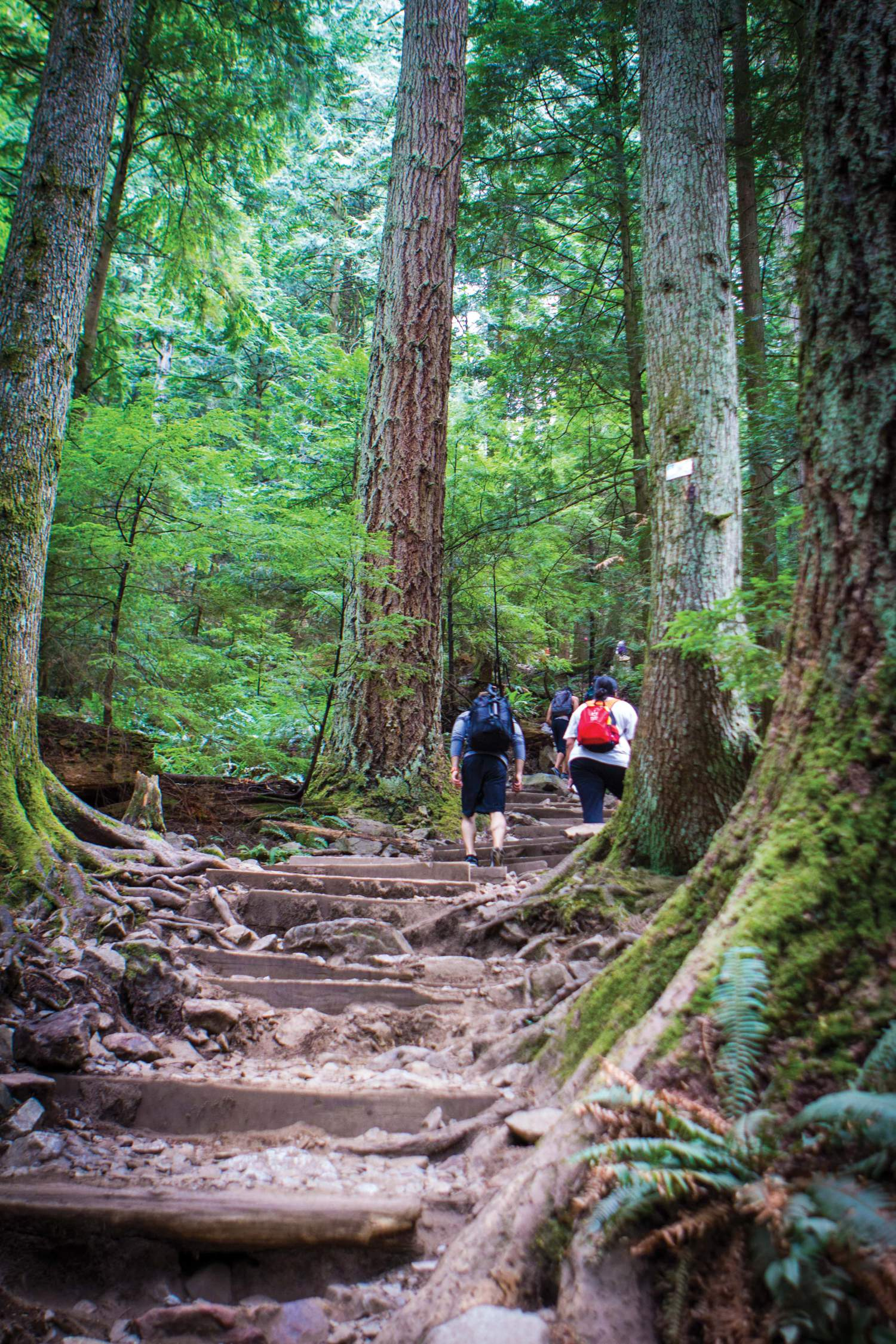Hiking in the mountains of Vancouver
