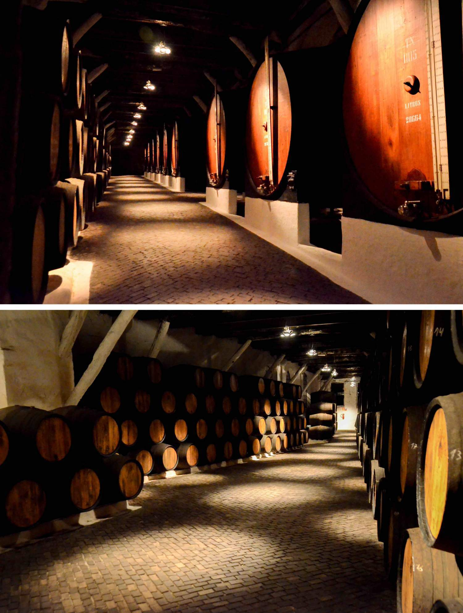 Sandeman port wine maker visit in Porto