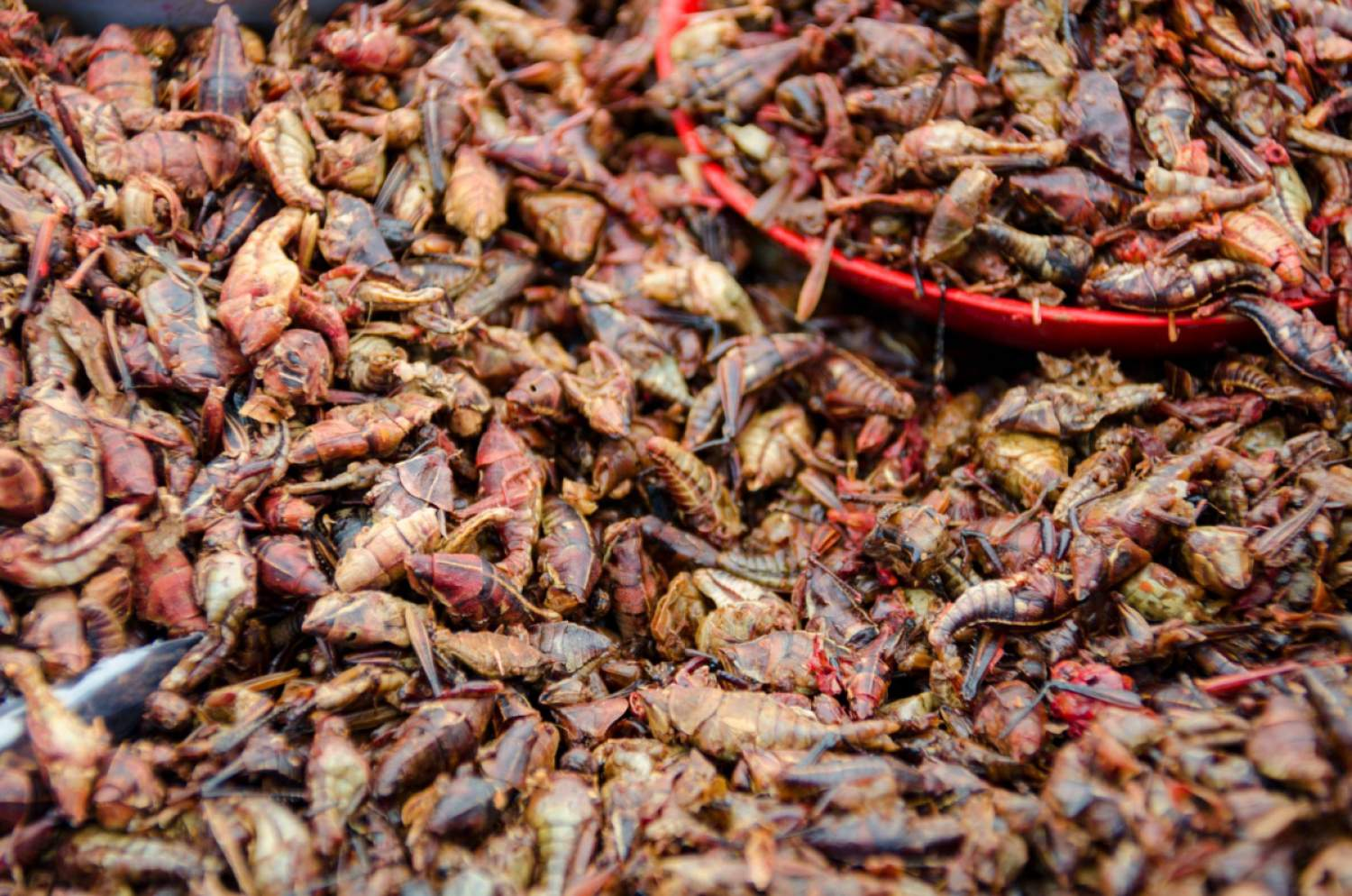 Edible insects, Oaxaca