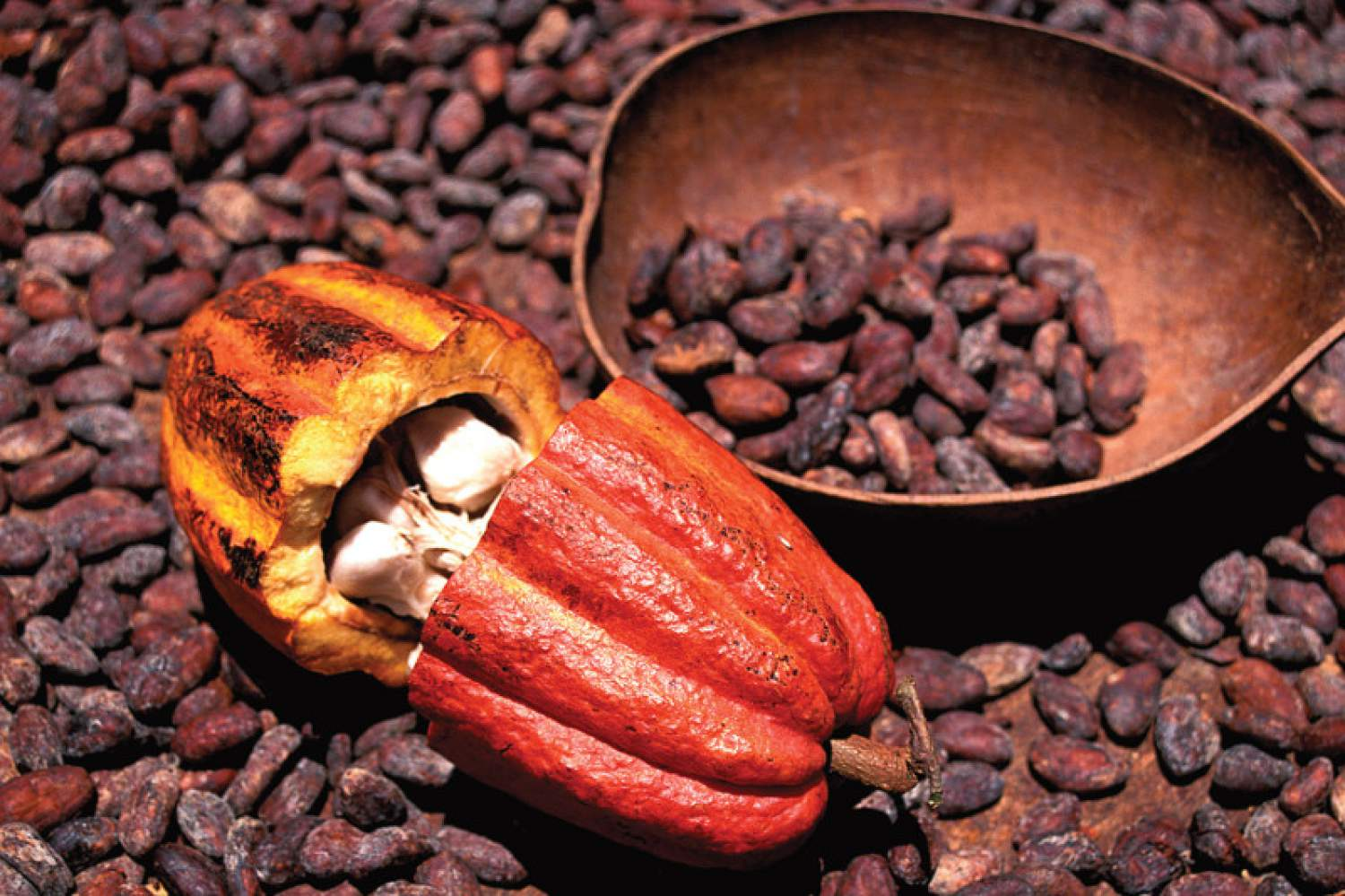 Cacao at the food market, Guadeloupe