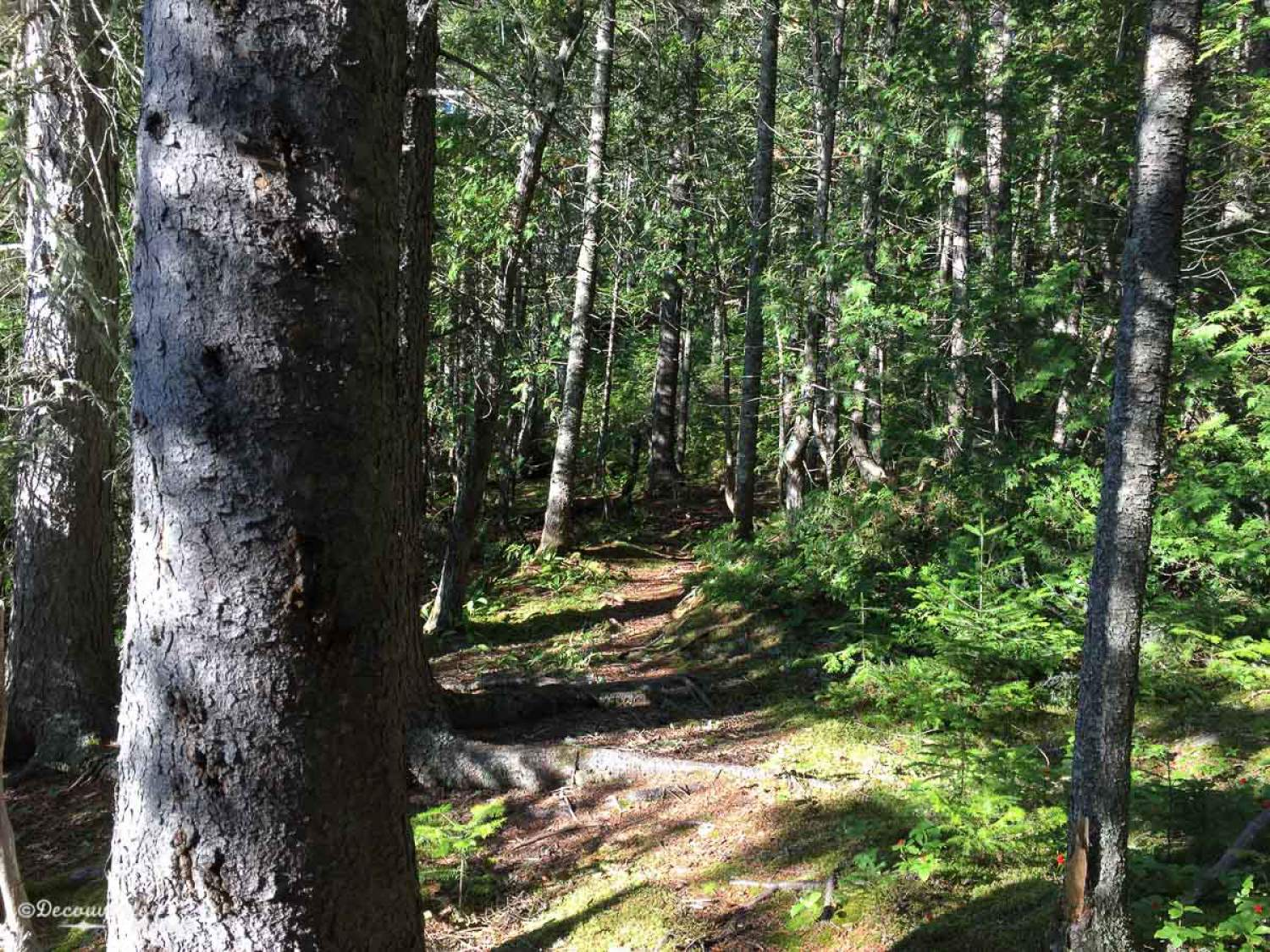 Hiking at the Mont-Tremblant Park