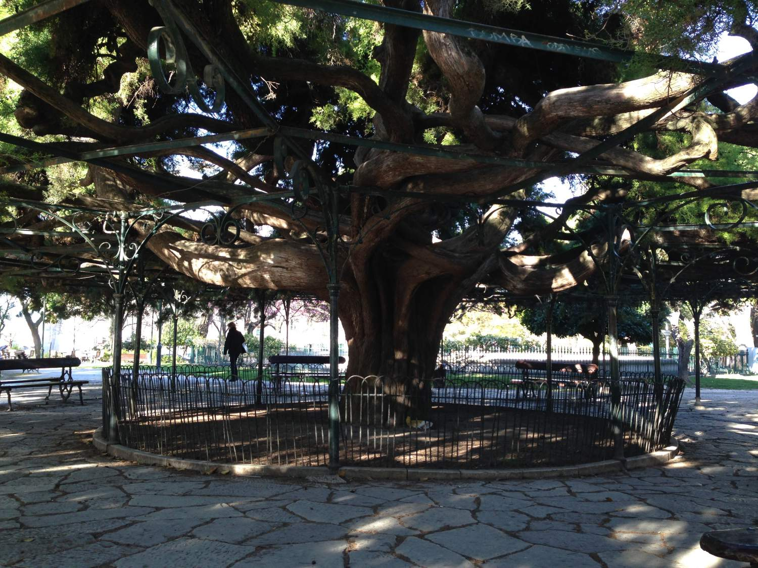 Big tree in Jardim do Principe Real, Lisbon
