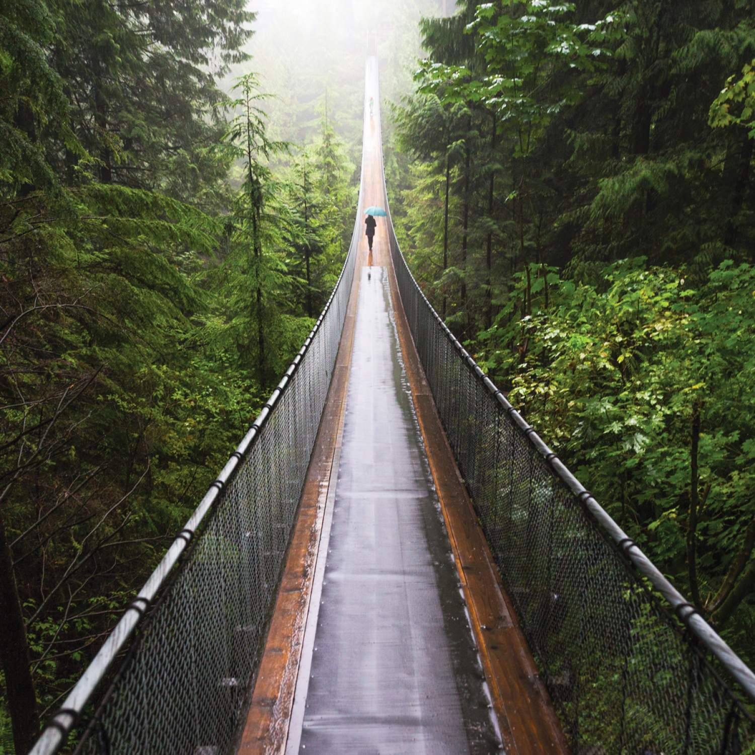 Capilano's suspension bridge in Vancouver, Canada