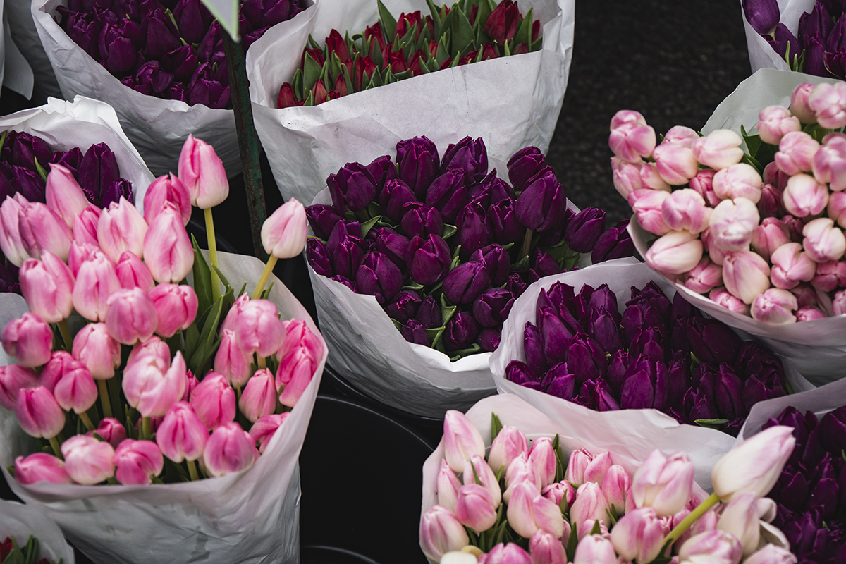 Tulips at the Columbia Road Flower Market in London