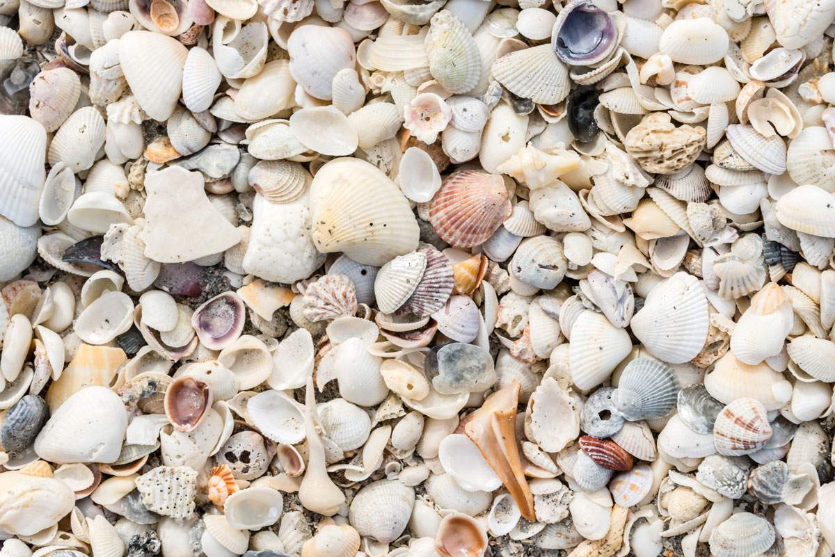 Sea shells on the beach in Florida