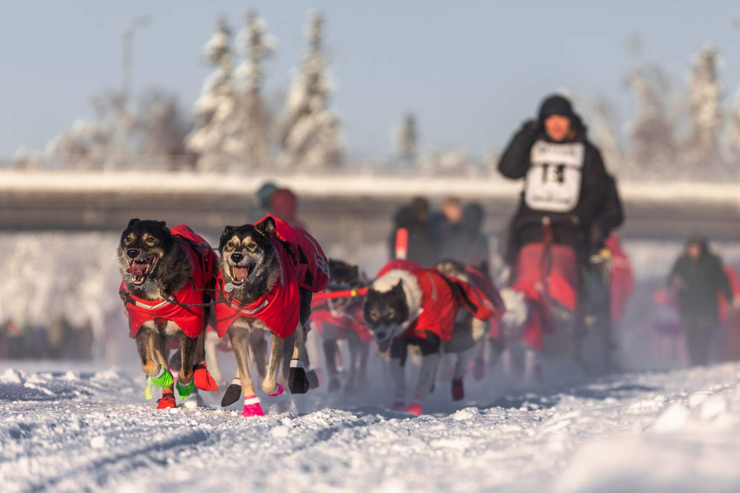 Yukon Quest, dog sled race