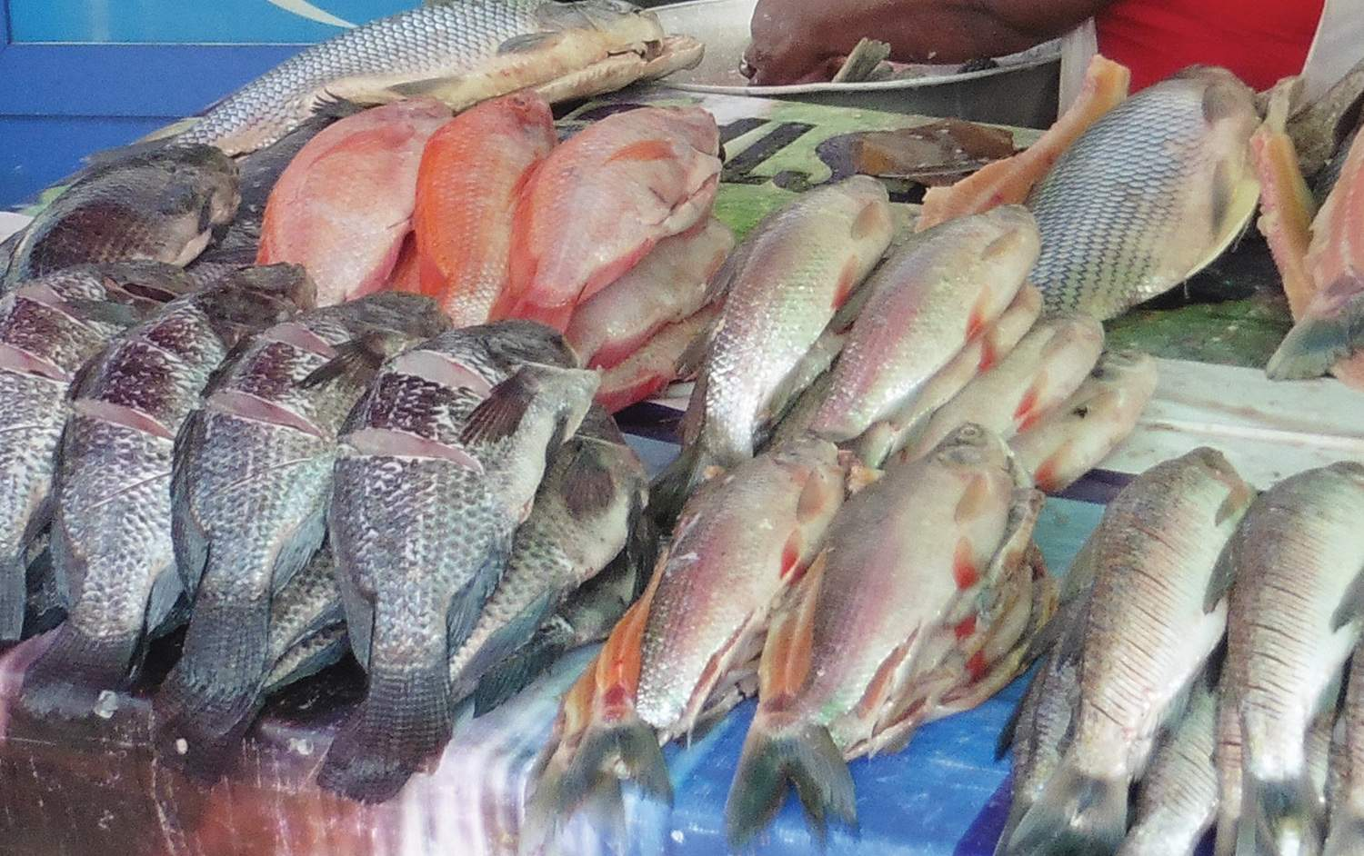 Fish in Cartagena