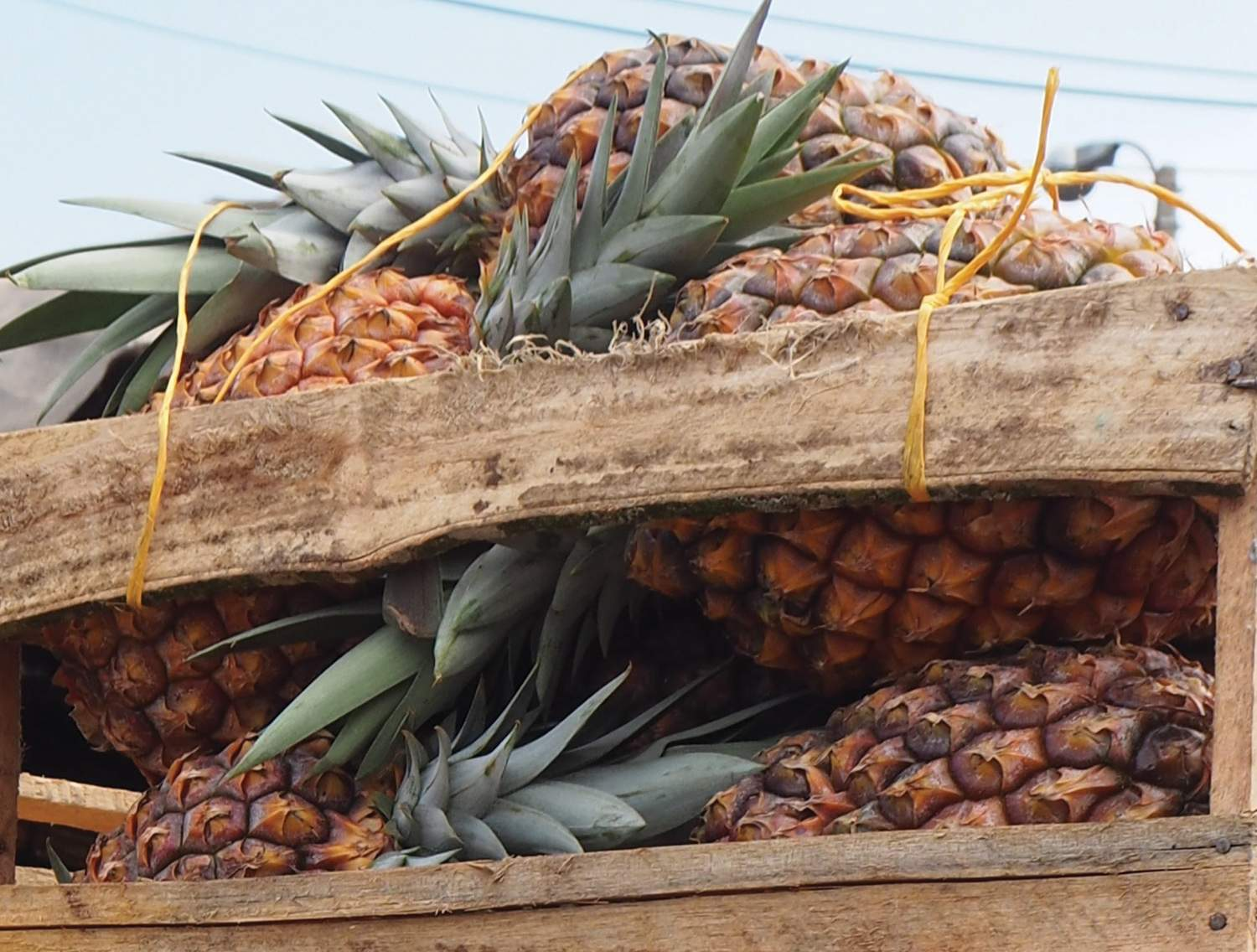 Pineapples in Cartagena