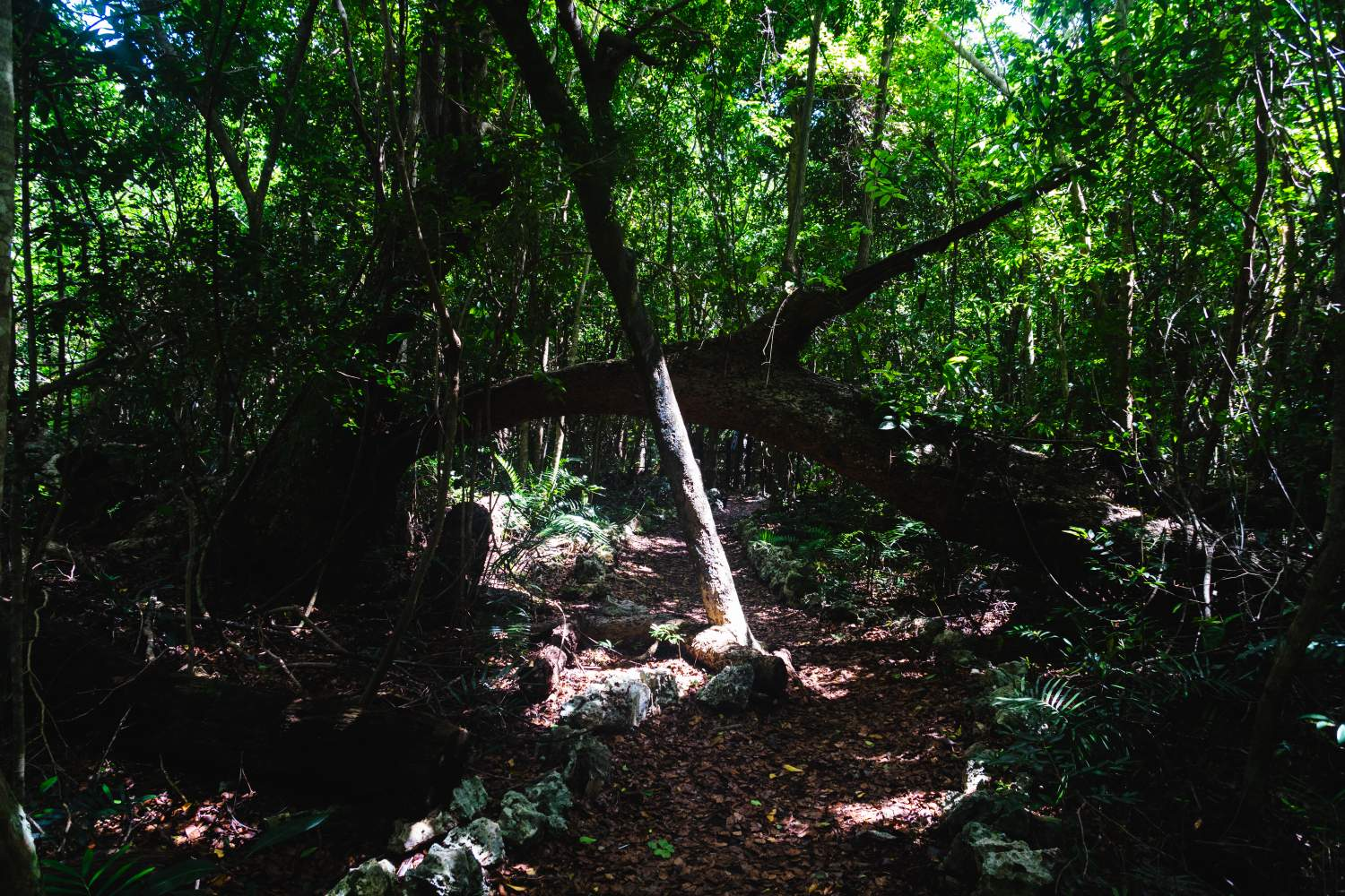 Treck in the Indigenous Eyes Ecological Park and Reserve in Dominican Republic