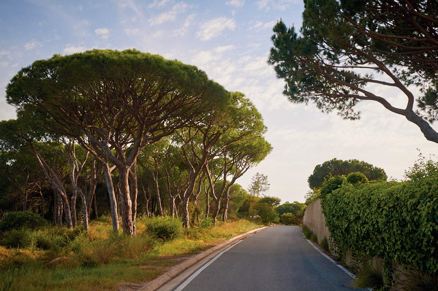 Trees on the road