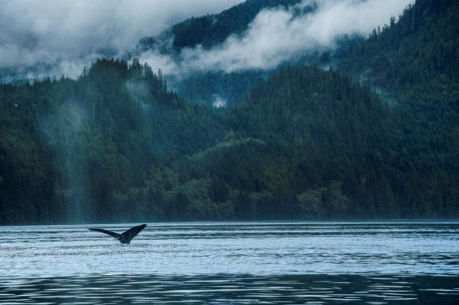 Whale watching in Vancouver