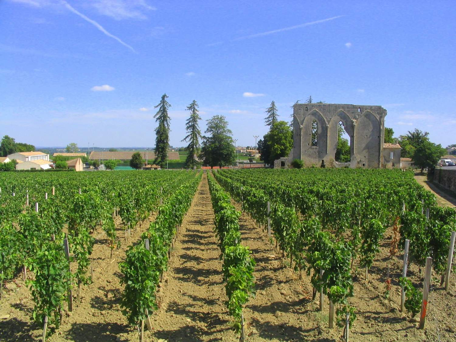 Vignoble à Saint-Émilion, France