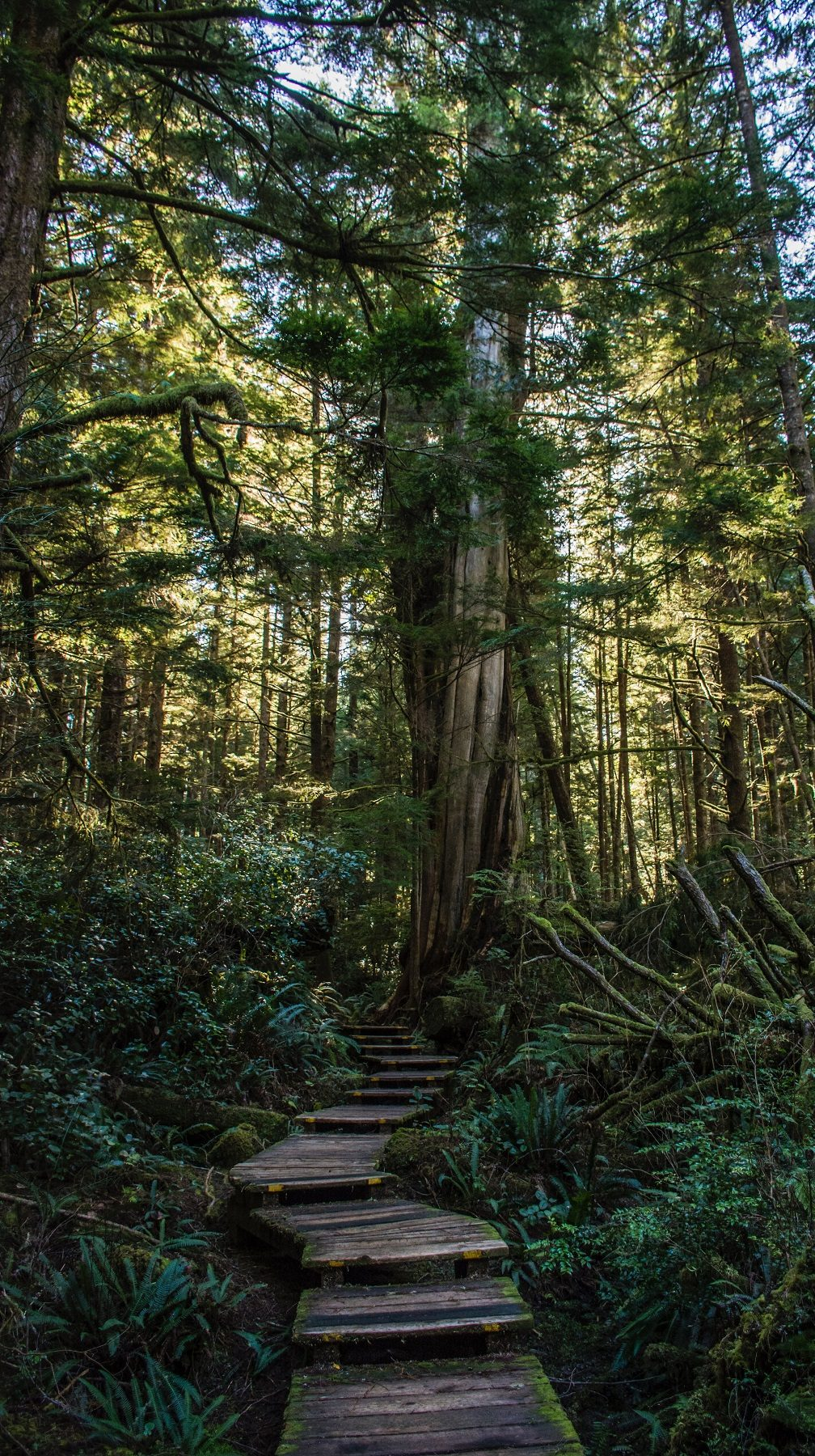 Pacific Rim trail -From Tofino to Banff: a 14-Day Itinerary in Western Canada