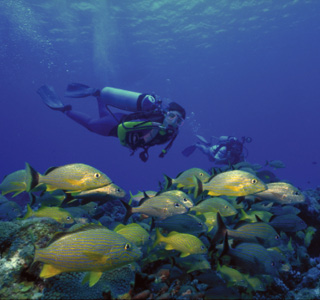 Cozumel-Diving